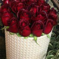 جعبه گل رز قرمز هلندی