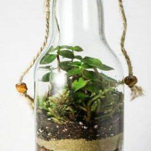 تراریوم طبیعی گراس گرین