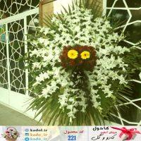 تاج گل خورشیدی متوسط در شیراز