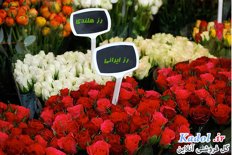گل رز عمده در شیراز