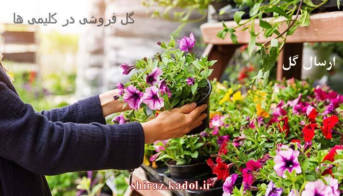 گل فروشی در کلیمی ها ، ارسال گل در کلیمی ها شیراز